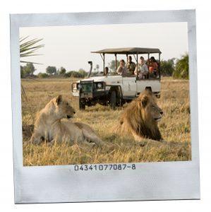 safarialbus